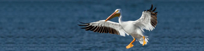 slider_cropped_Pelican9